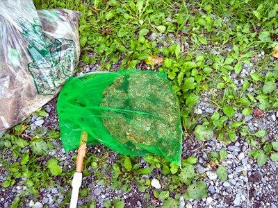 夏・害虫駆除の画像