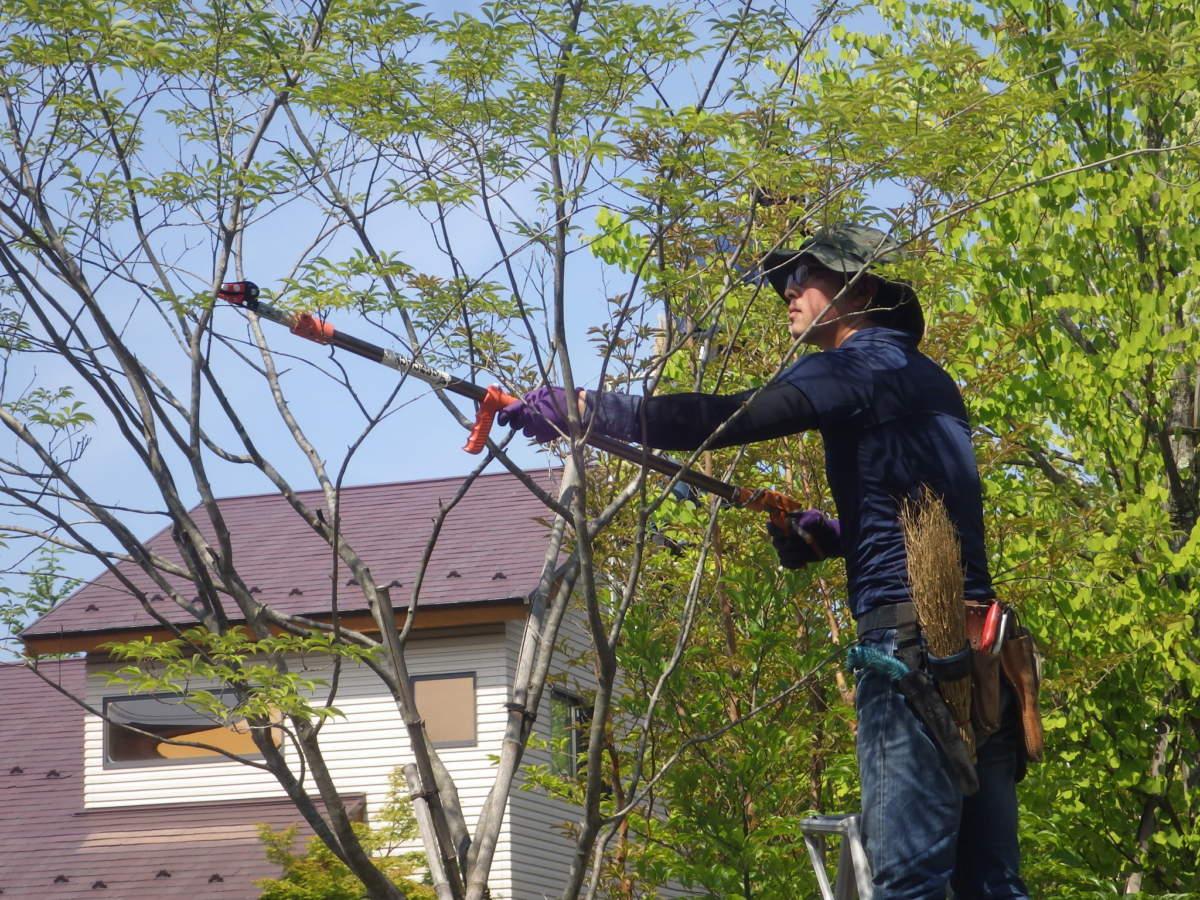 庭園管理の画像